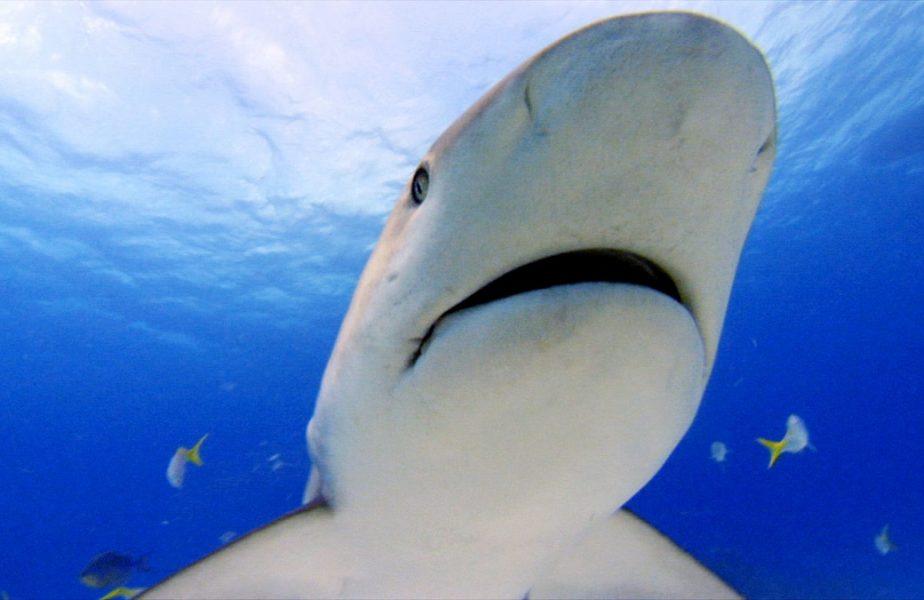 """A scăpat ca printr-o minune de atacul a doi rechini: """"Aproape că am murit acolo"""""""