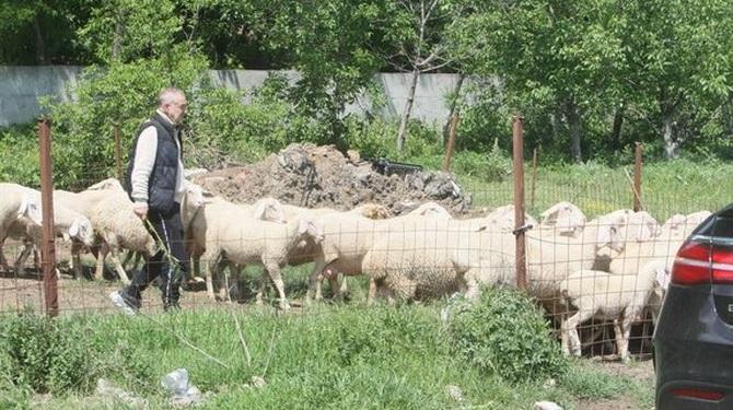 Aroganţa lui Becali! Stâna construită pe un teren de milioane de euro. Rasă specială de oi