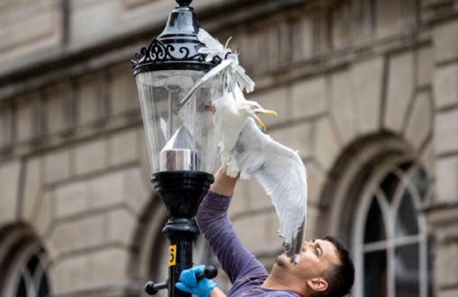 Un român a devenit erou la Dublin. A salvat un pescăruş înţepenit într-un stâlp de iluminat stradal!