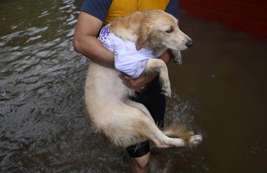 O femeie a murit după ce a sărit în apă ca să îşi salveze câinele. Animalul a ajuns nevătămat la ţărm!