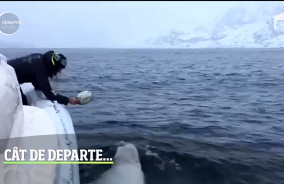 A fugit de coronavirus și a ajuns la polul frigului, să joace rugby cu o balenă albă!