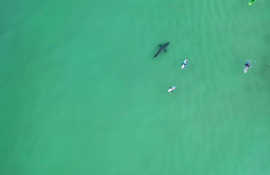 Au ieșit să facă surf, dar nu şi-au dat seama că lângă ei înota un rechin uriaş.Totul a fost filmat cu drona
