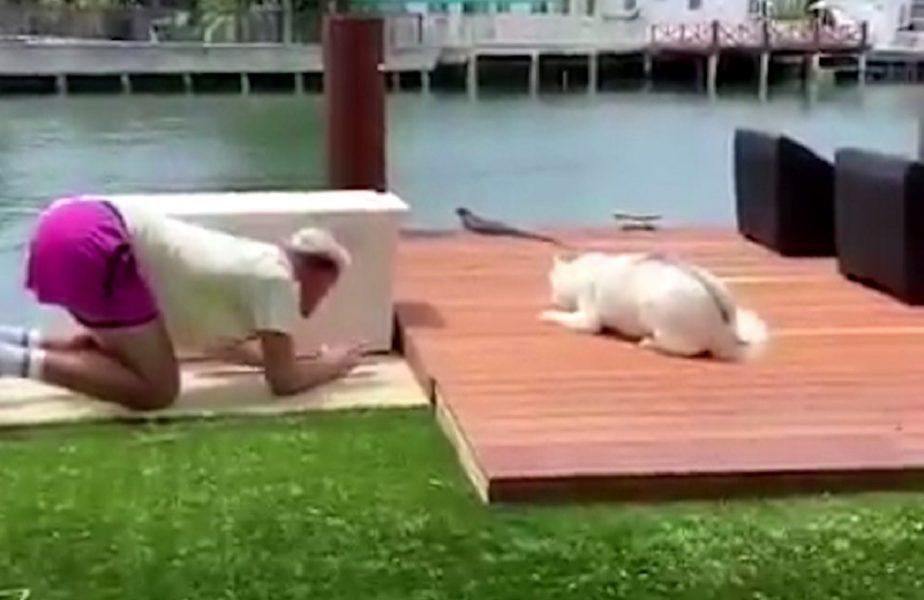 Câinele i-a furat stilul