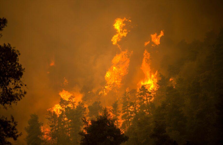 """""""E tragic ce se întâmplă!"""" Mărturiile copleşitoare ale unui român din mijlocul incendiilor din Grecia: """"Nu ştiu cum se va stopa, e periculos în orice zonă"""""""